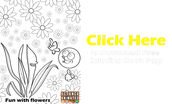 Coloring-Book-Photosynthesis-image